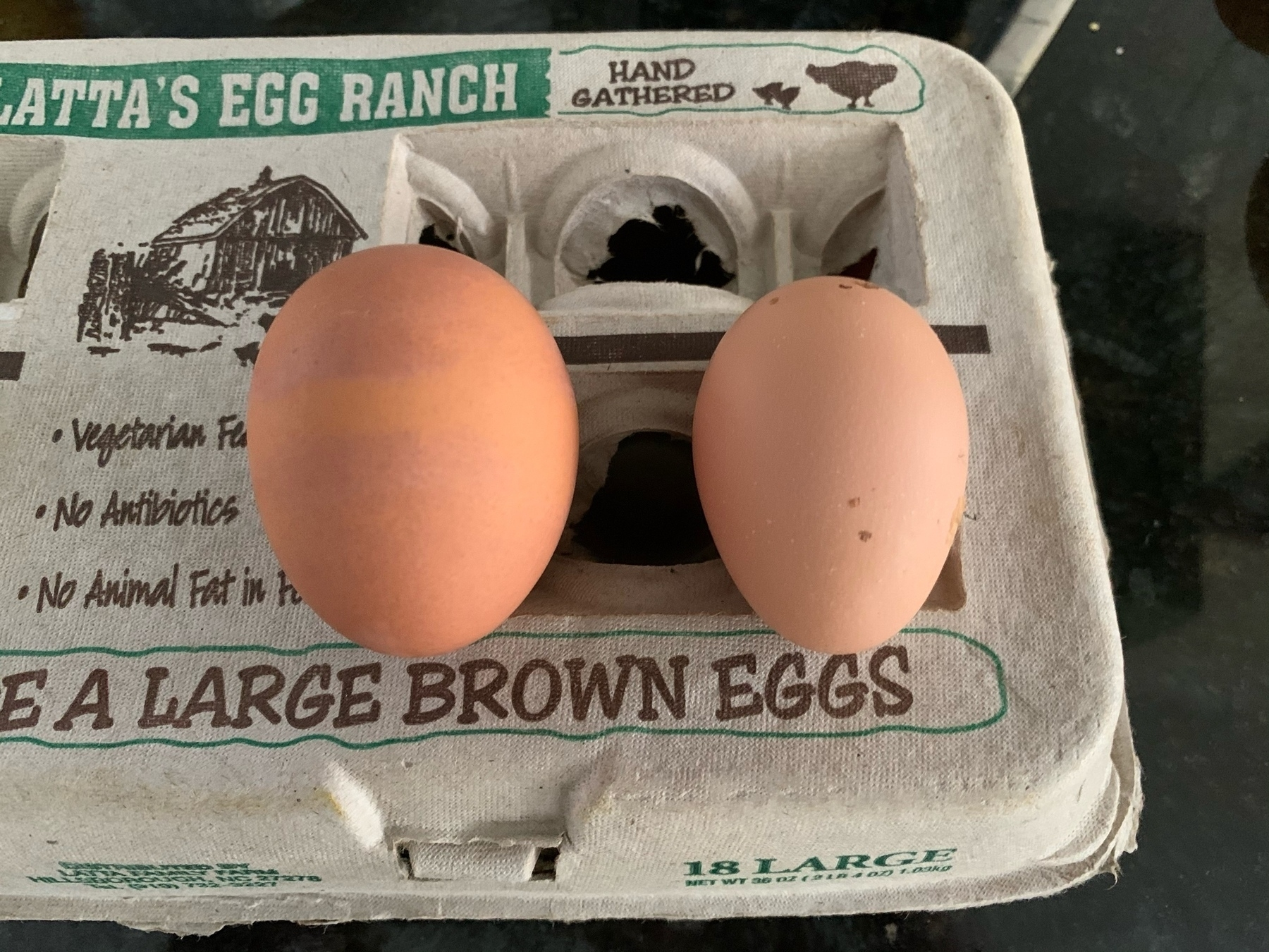 Store bought egg (left) next to our hen Latte's first egg (right).